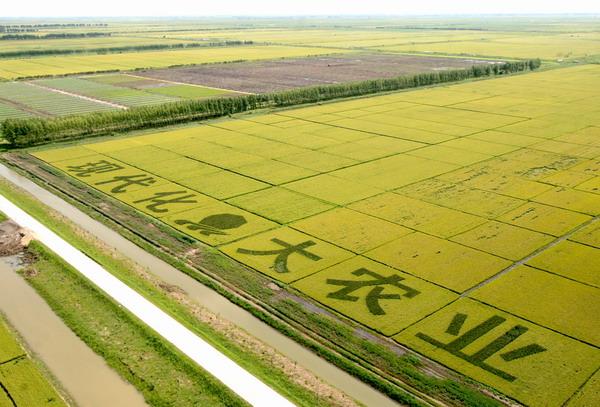 agriculture-blockchain