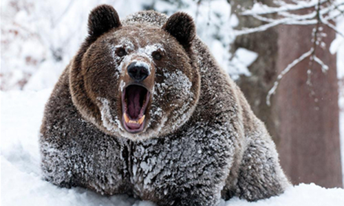 """Chinese Bitcoin Opinion Leader Shares His """"Survival Skills"""" in Last Bear Market"""